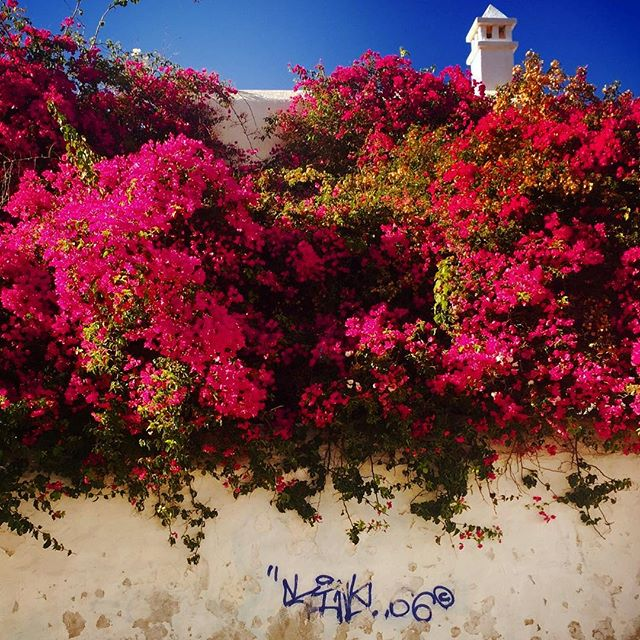 #greece #mykonos #graffiti #nature #sky #sun #elysium #pretty #sunset #sunset_united #beauty #light #photooftheday #love #sunsethunter #red #sunset_madness #sunset_pics #summer #abstractmybuilding #picoftheday #cool #view #architecture #all_shots #beach #instagood #holiday #flowers