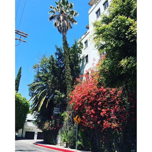 #la #losangeles #us #usa #america #hollywood #hot #ilovela #california #cali #urbano #urbanart #instahub #ic_cities #city #urban #love #town #igshots #justgoshoot #fabshots #implus_daily #popularpic #loveit #travel #vacation #weho #gay #chateaumarmont #palmtree