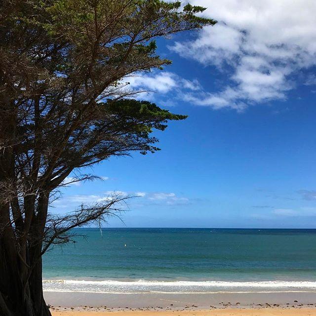 #torquay #torquaybeach #reallymelbourne #melbournetodo #onlymelbourne #Melbournelife #melbournenow #melbourneILoveYou #igersmelbourne #Melbourne_insta #Melbonpix #australia #oz #aussiegram #travel #seeaustralia #beautiful #love #iphoneonly #photooftheday #picoftheday #bestoftheday #seeaustralia #australiagram