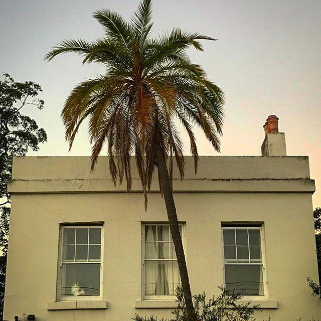 #palmtree #collingwood #fitzroy #lookingup #summer #architecture #onlymelbourne #Melbournelife #melbournenow #melbourneILoveYou #igersmelbourne #Melbourne_insta #Melbonpix #australia #oz #aussiegram #travel #seeaustralia #beautiful #love #iphoneonly #photooftheday #picoftheday #bestoftheday #seeaustralia #australiagram
