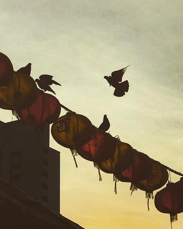 #singapore #chinatown #lanterns #bird #love #iphoneonly #photooftheday #picoftheday #bestoftheday #instagramhub #instahub #igers #travel #travelgram #traveling #singaporean #singaporelife