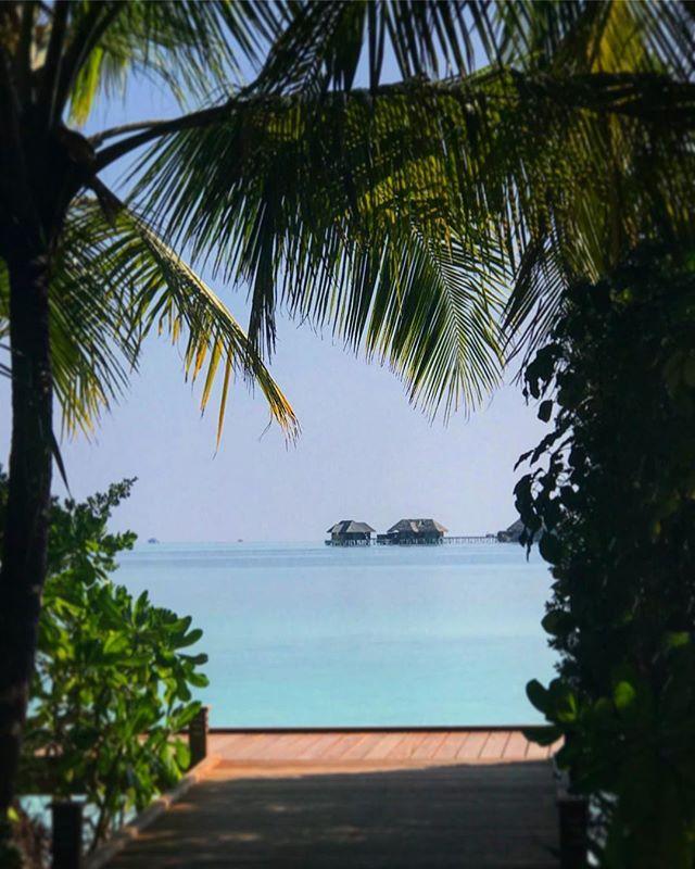 #maldives #conrad #travel #instagood #picoftheday #palmtrees #sun #rangali #maldives_allshots #easter #traveling #instatravelhub #holiday #vacation #travelling #hot #love #ilove #instatravel #tourist #instalive #instalife #tourism #hot #love #maldivesislands #maldives2018 #conradmaldives #stayinspired #maldivesbeach